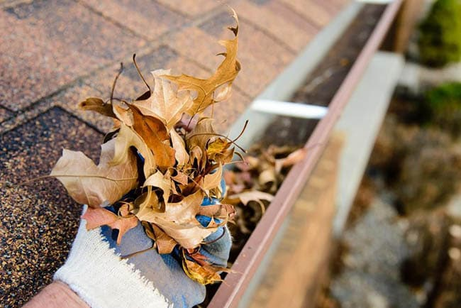 Gutter Cleaning in Tiverton